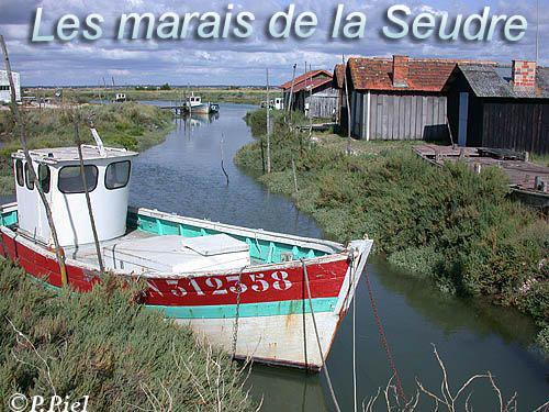 BIENVENUE DANS LES MARAIS DE LA SEUDRE !