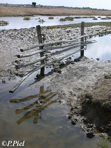 Barrière de bois se dupliquant dans l'eau d'une ancienne saline, Marais de Nieulle, août 2005