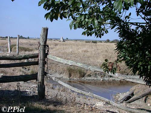 Barrière ouvrant sur une parcelle de marais où se trouvent des gabirottes, Marais de Saint-Martin, août 2005
