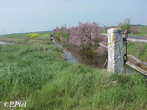 Barrière traditionnelle de marais avec ses monolithes de pierre, Marais de Nieulle ,août 2003