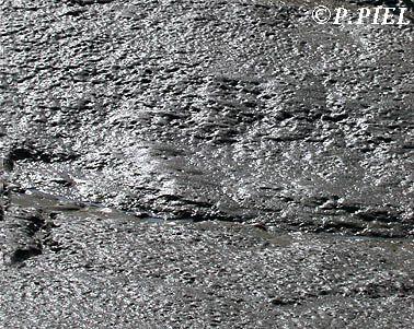 Bri encore appelé broue ou chalon, sédiments fluvio-marins typiques qui tapissent tout l'estuaire de la Seudre et ses marais.
