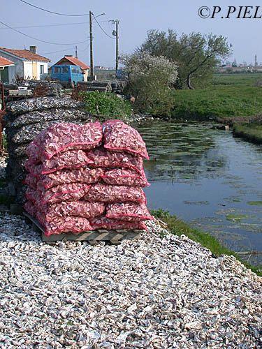 Poches d'huîtres devant les cabanes de Port Paradis, Nieulle, avril 2004