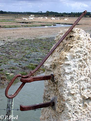 Pilier de pierre calcaire, rongée par le temps et les embruns, Marais de Saint-Martin, août 2005